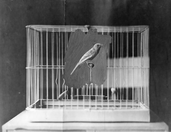 Sebastian Riemer, Bird Cage, 2017