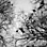 Der antike Schwarm. Überlegungen zur Archäologie (bio)politischer Verwirrung