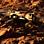Kelly Richardson: Mariner 9