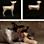 Mai Yamashita + Naoto Kobayashi:  Ein Hund und Holzskulpturen