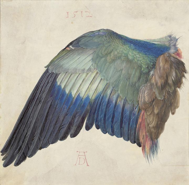 Albrecht Dürer | Der Flügel einer Blauracke, um 1500 (oder 1512) | © Albertina, Wien